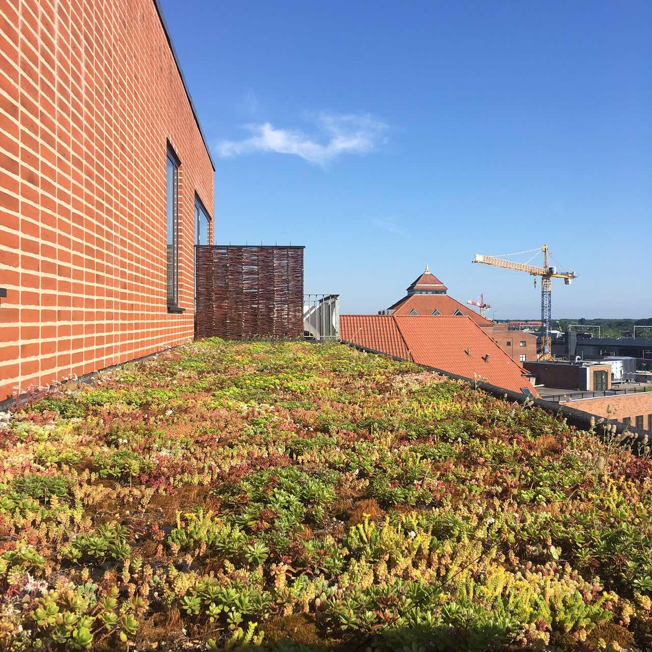 rooftop-plants_bumblebees