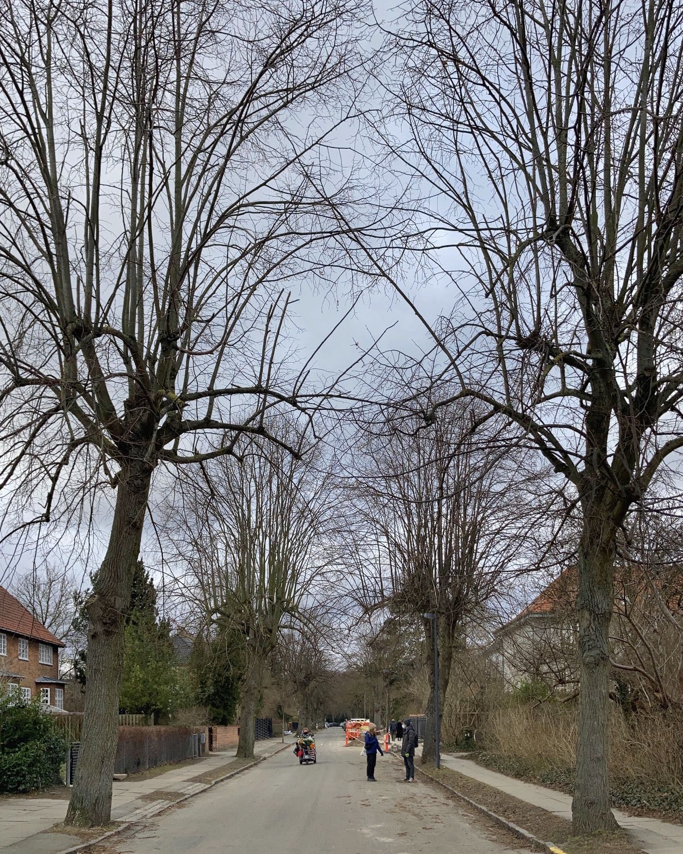 Gnarly trees alongside a suburban street on a grey afternoon. Two figures greet. There's another approaching on a motorised tricycle.
