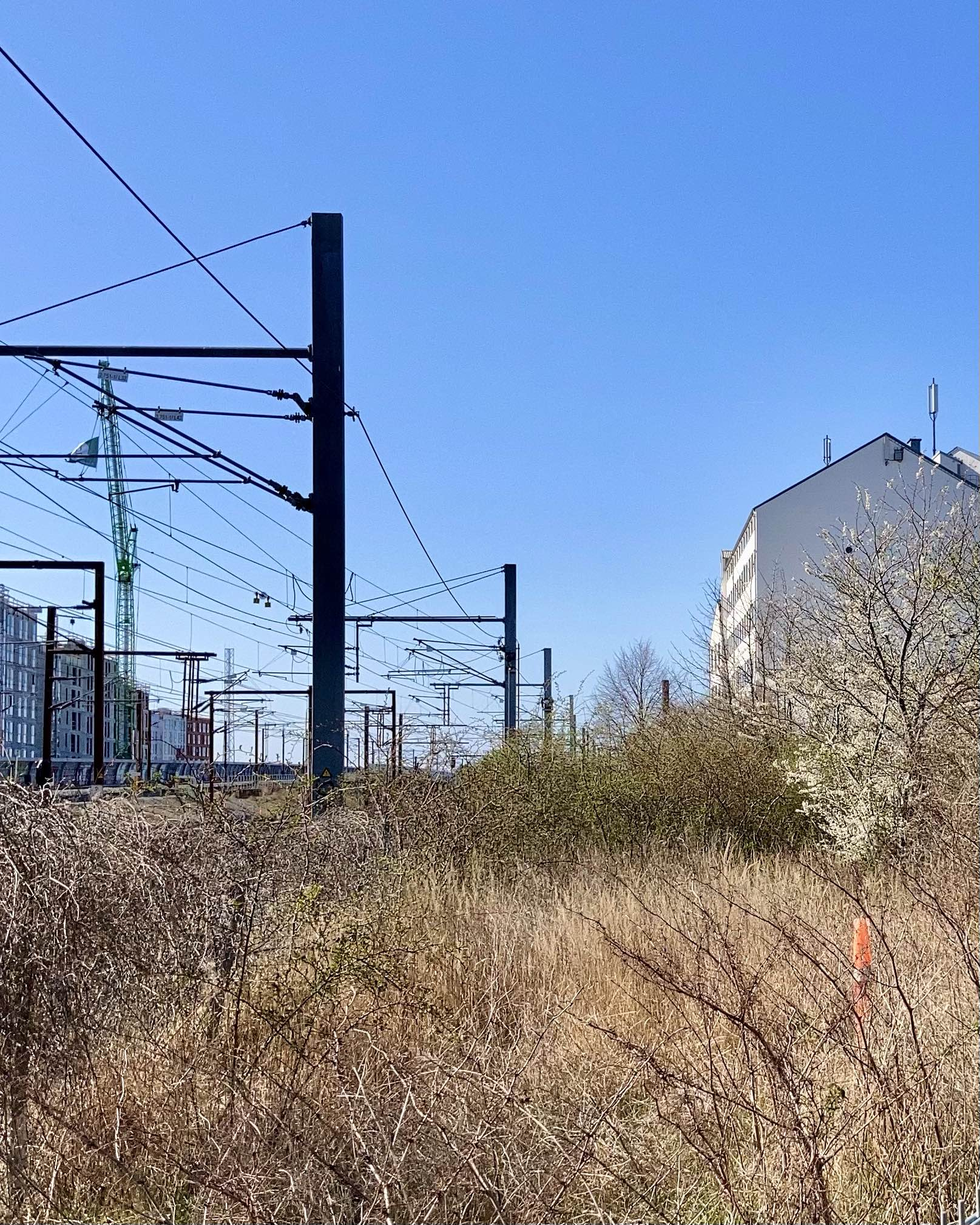 Train tracks, grass in the afternoon sun, a tree in blossom, a white building in the background. The angles of the train pylons and the roof of the building.